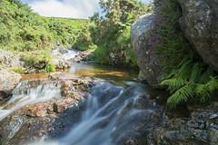 Meldon Summer (jebob) Tags: dartmoor devon water heather green rocks summer