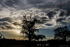 Coucher de soleil dans les Landes_6280 (lucbarre) Tags: coucher soleil sun nuages nuage ciel sky landes 40
