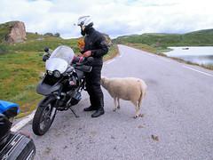 Interesting in tne wires on bike. (topzdk) Tags: norway mc motorcycle honda bmw 2016 summer austagder vestagder nature