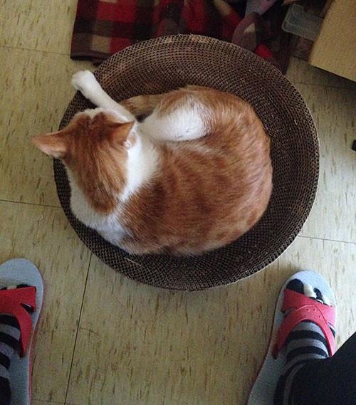 家裡來了一隻貓 裝備升級