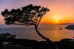 Sunset Tree (l3v1k) Tags: ifttt 500px sky sunrise sea sunset water beach greece travel island blue sun tree summer seascape rhodes rodos