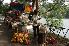 Coconut Water (LauraKro.) Tags: srilanka 2016 coconut water coconutwater man cut cutting shopkeeper