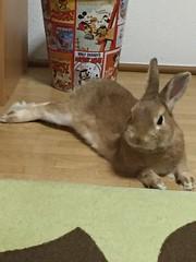 () Tags: love bunny  usagi pet rabbit