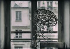 (Manuela Pace) Tags: paris people poetry art atelier artistes artist window vintage