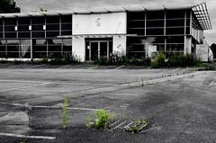 (Jean-Luc Lopoldi) Tags: fricheindustrielle fermeture abandonn concessionautomobile vide weeds mauvaisesherbes dsert empty bw noiretblanc cutout