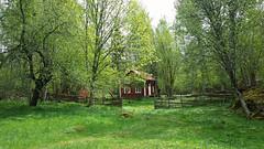20150509_113905 I den ljuva vrens tid (LellePelle) Tags: tree beauty fence spring sweden skandinavien cottage may smland greenery sverige lovely scandinavia trd stuga maj vr falurd falured sknhet grnska grdesgrd ljuv lellepelle vxtkraft