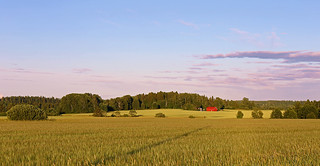 Swedish summer landscape just before sunset (Explore)