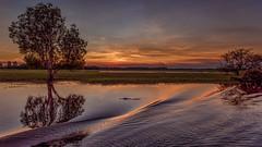 Crocodile in the sunset  DSC_8158- (BlueberryAsh) Tags: sunset river landscape nikon wildlife australia crocodile waters boatcruise northernterritory kakadunationalpark yellowwaters thetopend nikond750 stormscloudssunsetsunrise