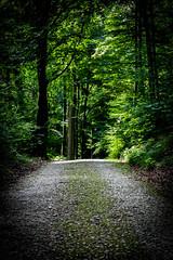 # (mai.qu) Tags: bielefeld teutoburger wald wood forest ostwestfalen natur nature flower einschlingen zweischlingen hermannsweg olderdissen tierpark klosterruine jostberg