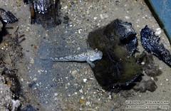 DSC_8265 (slamto) Tags: australia sydneyaquarium sydneysealifeaquarium fish