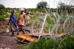 Malakal IDPs (Albert Gonzalez Farran) Tags: camp war southsudan civilwar conflict protection poc displacement idpcamp idp malakal internallydisplacedpersons displacedpeople protectionofcivilians unmiss unmisscamp