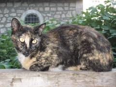 Cats_in_Trabzon (3) (Sasha India) Tags: cat turkey chat trkiye tur trkorszg journey gato  macska turquia kedi trabzon