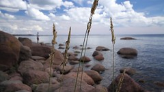 Varlaxudden (j_luomala) Tags: ranta hynteiset meri aallokko