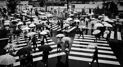 \\/ (Shirren Lim) Tags: rain umbrella street ricoh shinjuku tokyo japan people outdoor stripe abstract crossroads reflections shadows graphic bw city blackandwhite monochrome summer