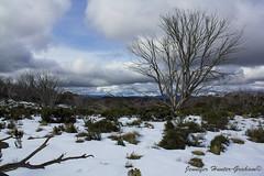 Alpine National Park (Jenniferhg97) Tags: alpine snow snowy plains trees australia clouds sky victoria mountains mt howitt landscape winter high country