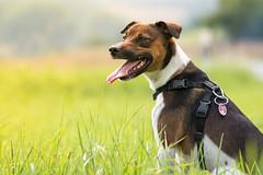Dog-Hund Outdoor (AndiFotoGrafie) Tags: hund dog studio heimstudio homestudio outdoor drausen indoor drinnen lustig jungtiere tier tiere