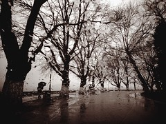 Winter (PattyK.) Tags: ioannina giannena giannina epirus ipiros balkans hellas ellada greece griechenland europe whereilive ilovephotography lovelycity winter rain cold umbrella lakeside bythelake raindrops              february 2015 ipiccy