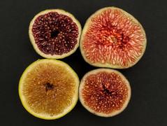 fig varieties (atgc_01) Tags: lumix lx3 fig closeup