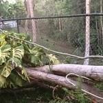 My Backyard-forest thumbnail