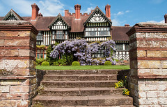Wisteria at Wightwick Manor (Bits n Bobs) Tags: nationaltrust wisteria wightwick wightwickmanor