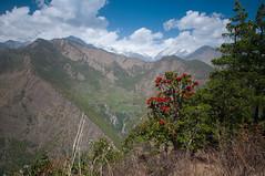 05042015-DSC_6771.jpg (seb.grd) Tags: nepal vacances np npal langtang centralregion districtderasuwa