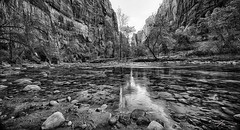 Zion National Park (Rkitichai) Tags: travel blackandwhite bw nature monochrome landscape utah nationalpark unitedstatesofamerica roadtrip northamerica travelnutzmn