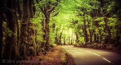 Treelined Road, Nr Porlock (PKpics1) Tags: road trees pollock exmoor exmoornationalpark culboneinn