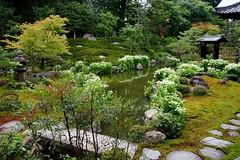 ( (nobuflickr) Tags: nature japan garden kyoto    saururuschinensis     ryousokuintemple  20160620dsc03403