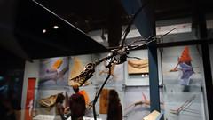 Dientitos 03026 (Omar Omar) Tags: pterosaurs pterosaurios ptrosaures flugsaroj flyingdinosaurs dinosauriosvoladores flugantedinosaroj dinosauresvolants lagartosvoladores nhm naturalhistorymuseum museodehistorianatural muse museo museum losangeles losngeles losangelesca losngelescalifornia la california californie usa usofa dscrx100 sonydscrx100 rx100 cybershotrx100 fsil petrificado teeth dientes dentadura