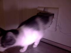 20160722-110203-i-1 (Catflap central) Tags: cat catdoor katzenklappe raspberry pi camera cats catflap kattenluik catflapj2nnl pet meow