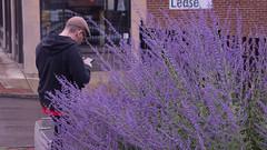 Stalking a wild Pokemon Go player (marcn) Tags: nh nashua photowalk pokemongo newhampshire unitedstates us