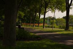 DSC_0218 (SebKomo) Tags: nikon d3000 f18 50mm qubec rivire stcharles nature landscape flowers fleurs natural lightning lumire naturelle