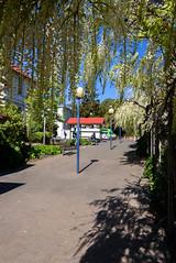 In the Shadows (Jocey K) Tags: newzealand spring bankspeninsula akaroa flowers wisteria sky buildings bus van stature lamps