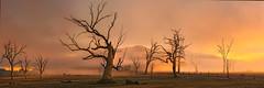 Wooden Soldiers (Ray Jennings AU) Tags: lakeeildon trees fog sunrise nikond810 panorama rayjennings sigma35mm14