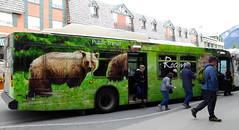 Bears on the bus! (vietnamvera) Tags: canadianrockies canadaflorafauna banff banffnationalpark bear brownbear transport bus greenbus wheelsonthebus