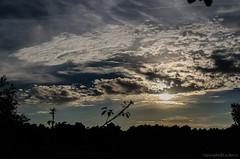 Coucher de soleil dans les Landes_6273 (lucbarre) Tags: coucher soleil sun nuages nuage ciel sky landes 40