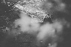Peeking (Wojtek Piatek) Tags: peeking couple engagement wedding love blackandwhite mono sony sonya99 zeiss135 zeiss dof shallowdof dublin ireland park bridge para zarczyny trees hug together portrait portret