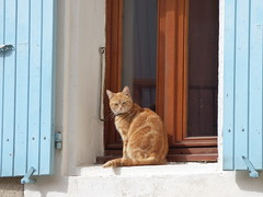 Chat du Lubron (thiery49) Tags: lubron chat cat roux