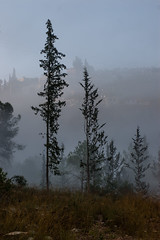 IMGP3135 (jamin.sandler) Tags: pentaxistds promasterspectrum728210mmf4265 einkerem fog