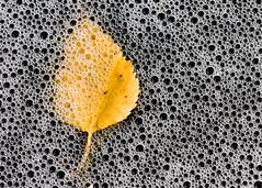 'Relativity' (Canadapt) Tags: creek leaf purple bubbles foam universe keefer canadapt