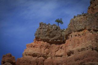Perseverance in Faith: The Lone Tree at Red Canyon