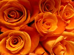 TOL (f l a m i n g o) Tags: flowers song explore thinkingoutloud edsheeran