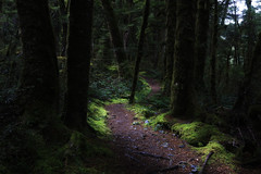 Forest Path (south*swell) Tags: newzealand nature forest scenery track path footpath beech pathway keplertrack
