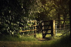 The gate (jen.murray75) Tags: natural light sunrise gate garden secret scotland nature woods forest walk outdoors nikon 85mm