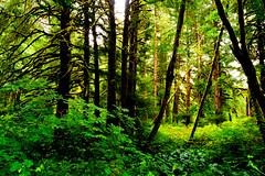 B1BBEST VAN DOZER WOODS-03795 (Gerry Slabaugh) Tags: oregon coast gerryslabaugh green van dozer woods trees mossy