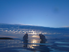 Kveldsbad ved humpebrygga (Brbel Nielsen) Tags: sea clouds horizon swimming water vann solnedgang sunset norway norge hundvg
