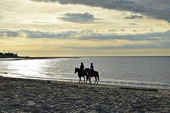 Give me silver, blue and gold... (Maria Godfrida) Tags: beach sunset water silver blue gold sky horses rider horseman sand evening eveninglight horsewoman sea