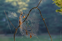 Spider Web_4288 (Explored July 27 2016) (smack53) Tags: smack53 spiderweb web outside outdoors melodylake palpond westmilford newjersey nikon d300 nikond300 summer summertime