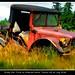 Rusty Old Truck on Anderson Island, Tacoma WA 16 July 2016