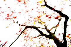 Red Berries VI (wide-angle.de) Tags: treesii de germany digital y201602
